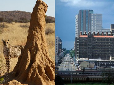 a termite mound and the building inspired by it